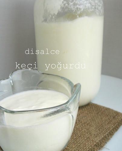 keçi yoğurdu yapılışı