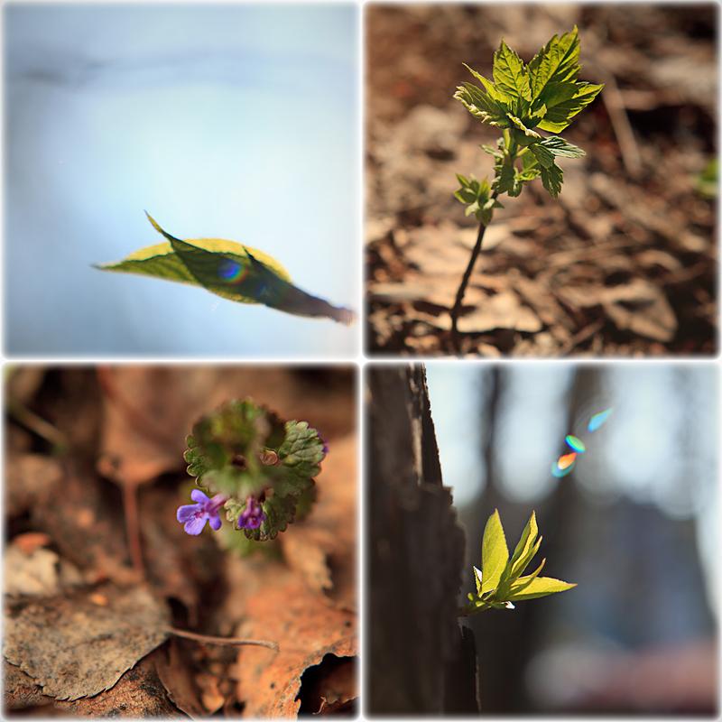 Весенняя природа. растения
