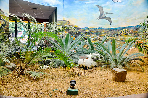 Museo de Paleontología (02)