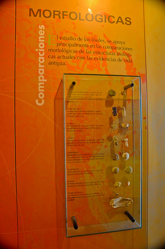 Museo de Paleontología (05)