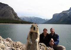 Squirrel Photobomber