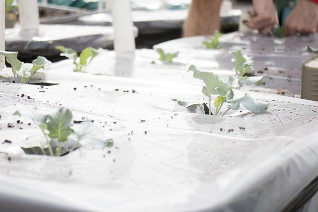 Seedling Planting Spring 2014_15
