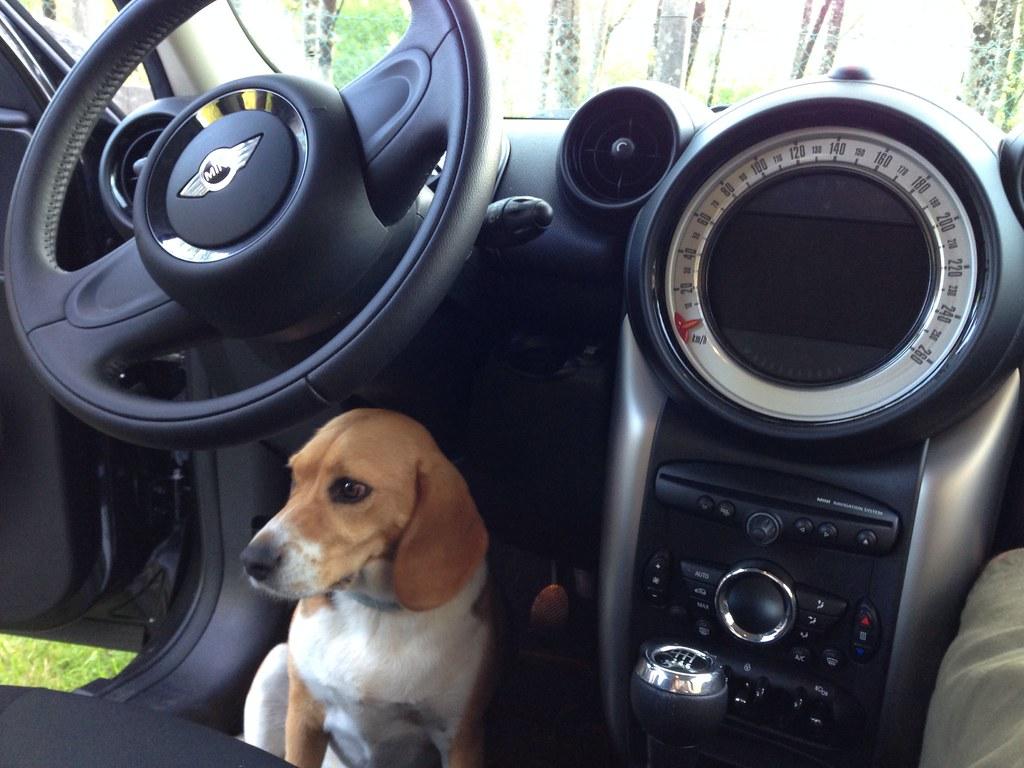 La conductora [193/365]