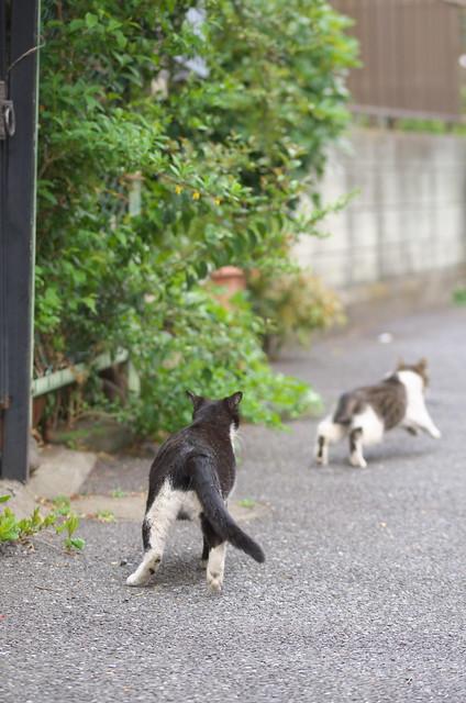 東京路地裏散歩 駒込編 ネコ 2014年4月13日