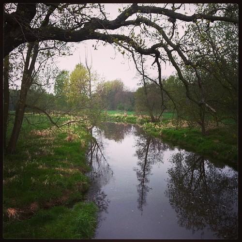 Auch an der Röder wird es langsam grün. #Exer #Bildvonderröderbrücke #Laufrunde