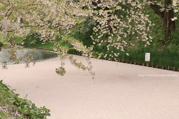 20140502_AomoriSakura_1049 f