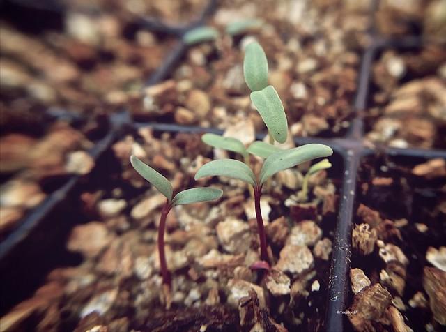 anteketborka.blogspot.com,  printemps 9