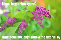 UPDATED LILAC JELLY tutorial redbud jelly spring DIY_edited-1