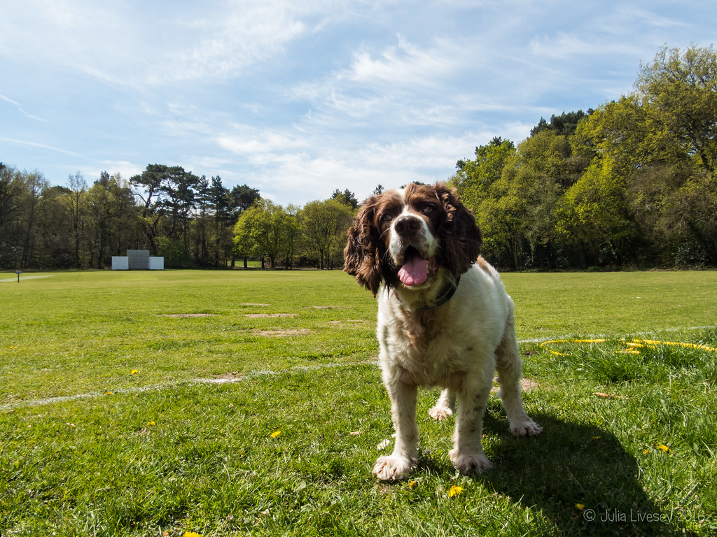 Max on the cricket pitch