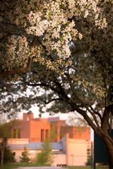 Spring Campus Flowers-1