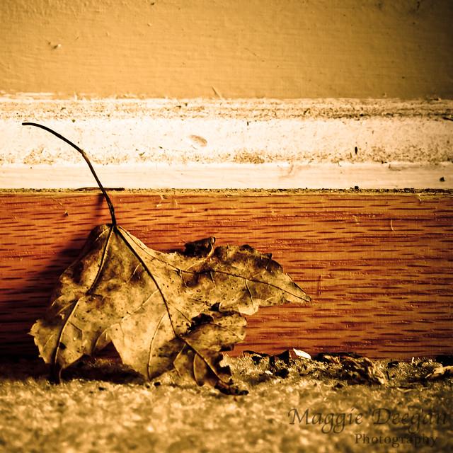 Baseboard Leaf