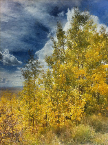 Golden aspens framed by a cloudy blue sky... Colorado!