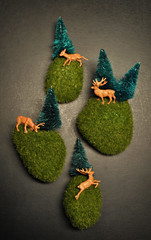 IC5- Mini Nature Dioramas