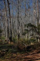 Boynton Swamp