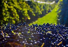 Mendoza: grandes vinos, productores chicos