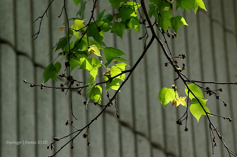 [K10D,F70-210]春。天。的。色。彩