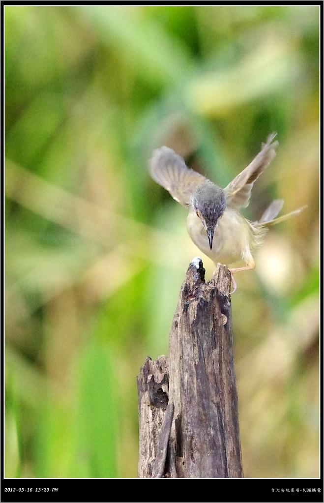 飛羽習拍-快樂鳥日子