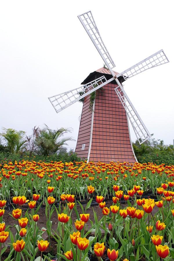 20120212后里中社觀光花市