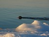 Swimming Otter #2
