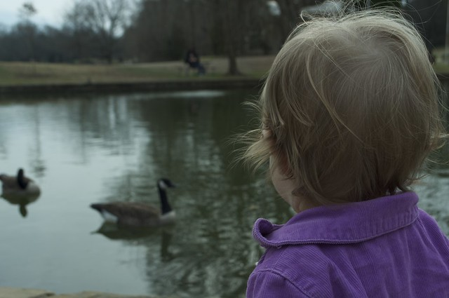 Watching the geese at Freedom Park