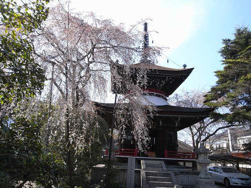 吉野の桜2011@吉野山-28