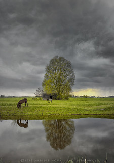 One tree and some horses....