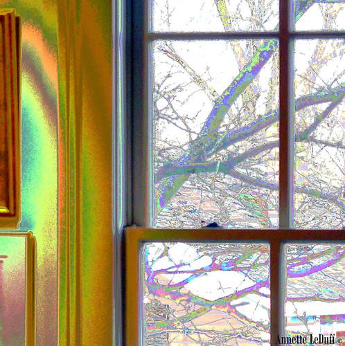 light musician music tree window colors contrast branches performance jazz frame flickrcentral quintet optics favorited throughaglassdarkly digitallyaltered flickraddicts jazzmusician njd romeomi lookthroughanywindow doorswindowsportalsgatesentryways starkweatherartscenter photoannetteleduff annetteleduff leduffcameraart nuevojazzdetroit 02262012