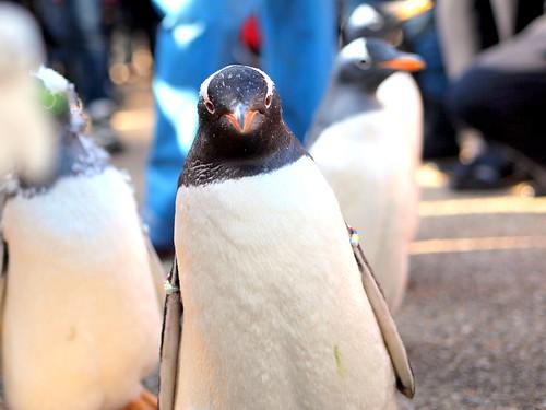 120301_penguine
