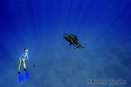 Best-snorkel-Kealakekua