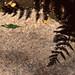 ギザギザの葉影
