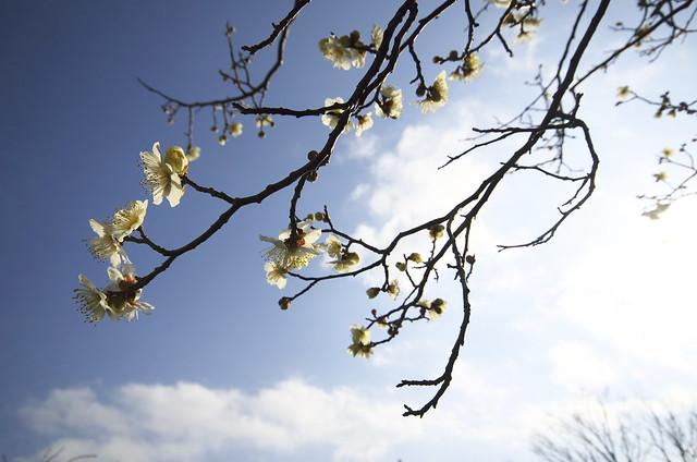 早春の空に