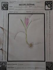 crocus nature journal Under an English Sky