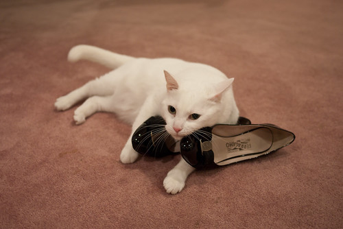 Shoe rubbing kitty