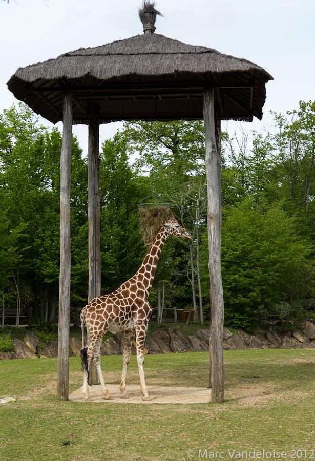 Sortie au Zoo D'amnéville le 05 Mai 2012 : Les photos 7002929224_ae7c87ee4a_o