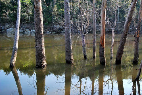 Picture showing a row of trees submerged in the waters of Table Rock Lake at Piney Creek Wilderness.