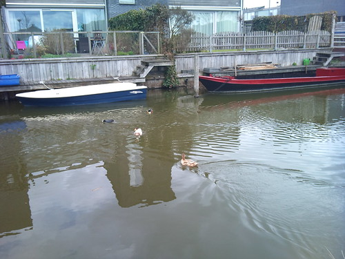 Ducks by XPeria2Day