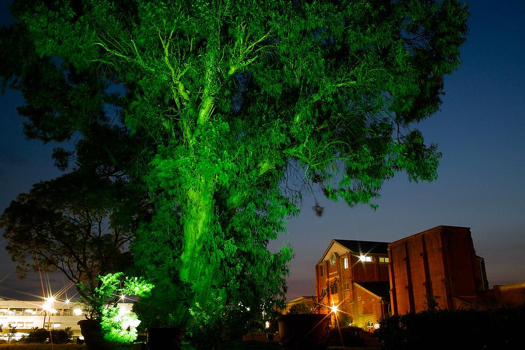 洲本市民広場 緑の木