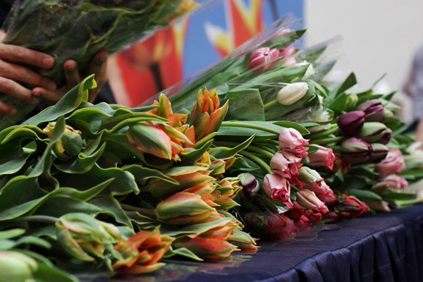 Colourful tulips at last year's sale