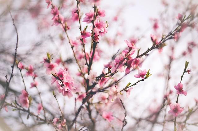 Spring Time 16