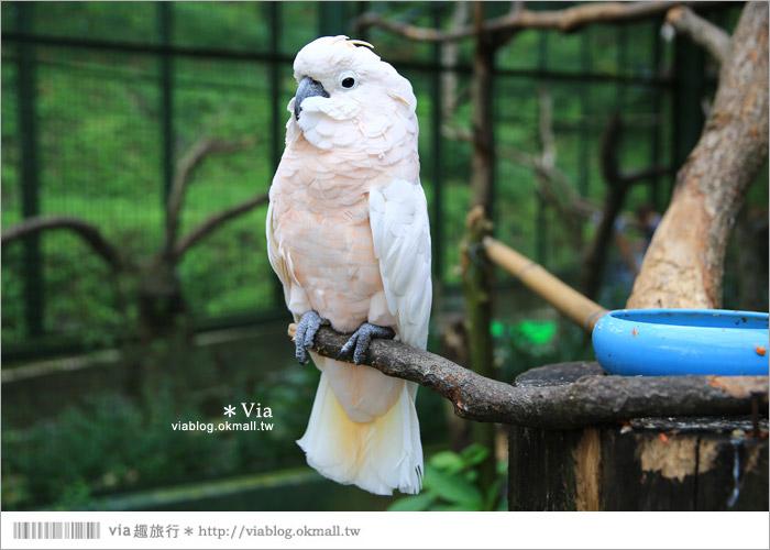 【新竹景點推薦】森林鳥花園~親子旅遊的好去處!在森林裡鳥兒與孩子們的樂園47