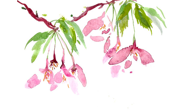 Sketchbook #95: Blooming Tree