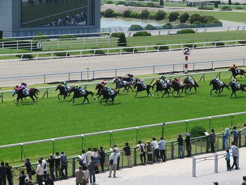 京都競馬場の2階からレースを見下ろす