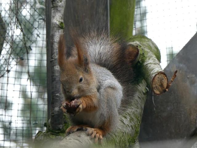 Zoo am Meer, sibirisches Eichhörnchen