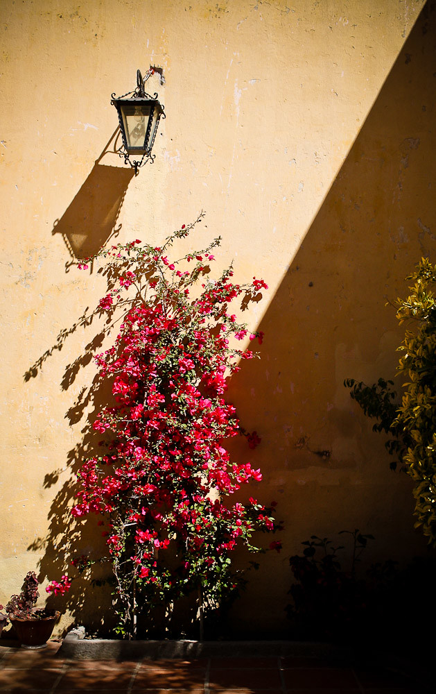 Plantas de sol y sombra flickr photo sharing - Plantas de sol ...