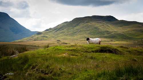 Sheep lander