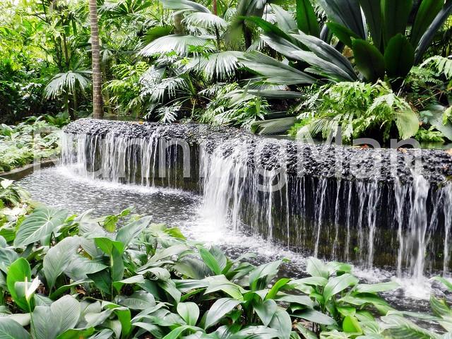 Singapore Botanic Gardens 05