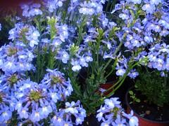 Mercado de flores da Columbia Road