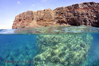 Best-snorkel-Shark-Bay