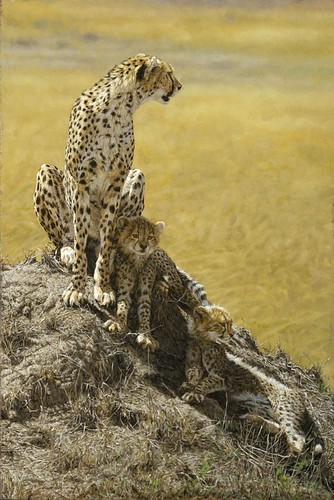 'Cheetah and Cubs' oil on board