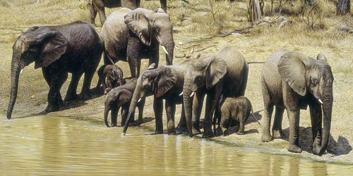 "'Elephant Family' oil on board 14"" x 32"